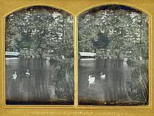 Wilhelm Schneider, Schwäne auf einem Teich (Swans on a Lake), c. 1860