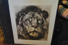 19th century, Lion, engraving,