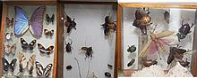 Collection of insects in shadowboxes.