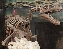 Velociraptor skeleton cast