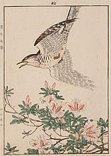 Imao Keinen, Japanese (1845-1924), Little Cuckoo and White Azalea, woodblock print, 12 3/4 x 9 1/4 inches (sight)