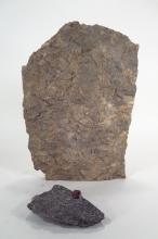 Sea Shell Fossil Accretion & Geologic Ruby