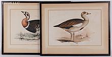 Edward Lear (British, 1812-1888) Two Lithographs