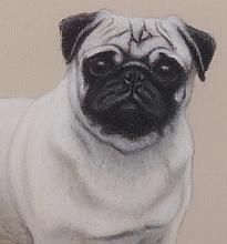 American School, 20th Century, Pastel Portrait of a Pug