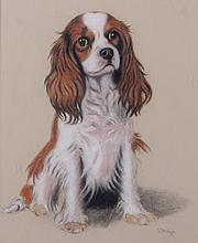American School, 20th Century, Pastel Portrait of a Spaniel