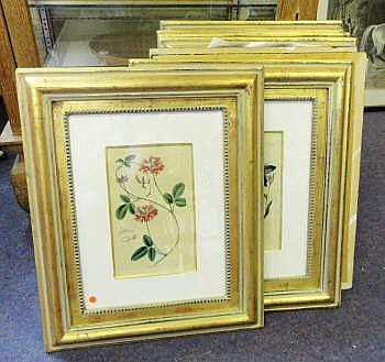 TROWBRIDGE BOTANICAL PRINTS, eight, Barclay after