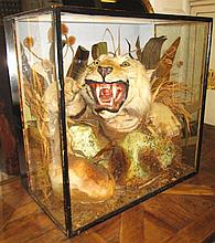 TAXIDERMY OF A TIGER, amongst a naturalistic scene