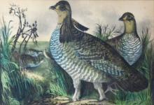 Chromolithograph, Currier & Ives 'Prairie Hens'