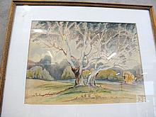 Framed Australian watercolour River Gum signed