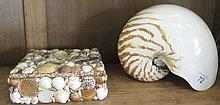 Large Nautilus shell with a vintage shell
