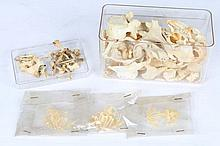 A SMALL GROUP OF VARIOUS SMALL ANIMAL SKULLS and