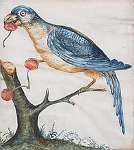 18TH CENTURY GERMAN SCHOOL A parrot perched upon
