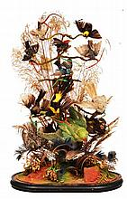 A VICTORIAN CASE OF PRESERVED EXOTIC BIRDS set wi
