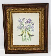 GOLDFINCHES W IRIS IN 19TH C GILT WOOD FRAME