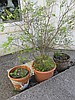 Lot of Garden Plants with Pots