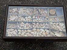 A cased collection of sea shells