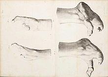 Anatomia - Bèche, Jean-François