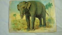 Richmond Ranges of CT Elephant Trade Card