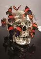 Philippe PASQUA né en 1965 - Vanité aux papillons