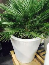 4' x 4' White Planter with Small Mediterranean
