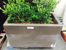2' x 3' Brown Rectangular Planter with Boxwood