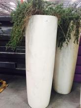 2' x 6' White Planter with Rosemary Bush