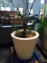 4' x 4' White Planter with African Sumac