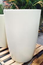 2' x 4' White Planter with Sago Palm