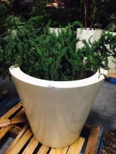 4' x 4' White Planter with Rosemary Bush