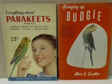 EVERYTHING ABOUT PARAKEETS & BRINGING UP BUDGIE