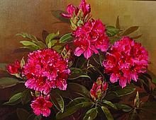 Pamela Davis (20th Century) British. 'Pinky Red Rh