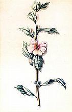Loo, Pieter van  Drei Blumenaquarelle auf Papi