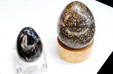 Fossil Fish Eggs & Ocean Bottom Specimen Egg Lot
