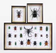FRAMED, MOUNTED BEETLES AND SCORPION - 22 specimens in 3 frames