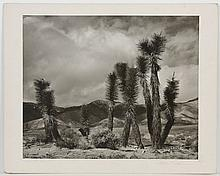 RUTH RASMUSSEN (WA) PHOTOGRAPH - Black and white photo printed on paper, pencil signed on matting. Titled