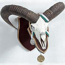 TAXIDERMY: MOUFLON - European plaque mount male with Gold and Silver Awards, Silver Oak award.