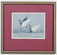 ROBERT F. MORGAN (1929- , MT) GOUACHE ON PAPER - Signed painting of two mallard ducks flying near a pond with reeds. Condition good....