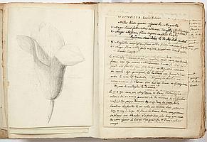 Henri-Louis DUHAMEL DU MONCEAU (1700-1782) physicien, botaniste et agronome. Traité des arbres et arbustes qui se cultivent en Fran...