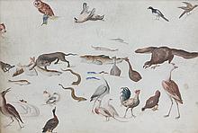 École allemande vers 1700 Etude de coquillages et animaux : une paire Aquarelle, gouache et crayon sur velin 21 × 30 cm