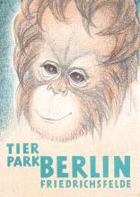 Original 1950s German Berlin Zoo Poster ORANGUTAN