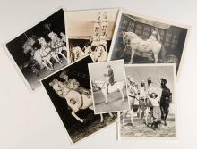 Horses in the Circus Photo Archive. 1920s  1940s. Twenty-seven different original 8 x 10