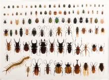 719. 100 Insect Specimens Encased In A Lucite Block. Including a variety of beetles, centipedes, and others. 19 x 14