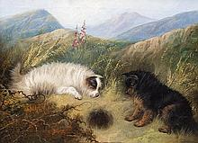Terrier dogs hunting by a rabbit hole