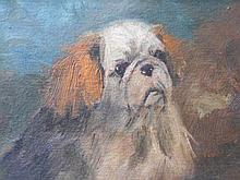 A study of an Imperial Pekingese
