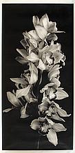 Jonathan Singer, Cascade of Orchids in Black and White, Digital Photograph