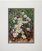 Jeanne M. Garrett, Daisies, Watercolor Painting