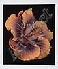 Jonathan Singer, Wild Flower, Digital Photograph