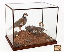 TWO EMBALMED PARTRIDGES