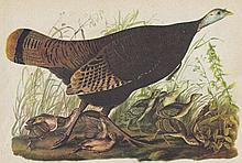 John James Audubon Circa 1946 WILD TURKEY