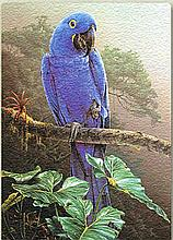 Art Glass Tile of Hyacinth Macaw